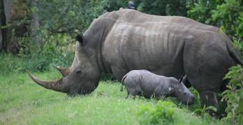 Tag på opdagelse på safari i Tanzania