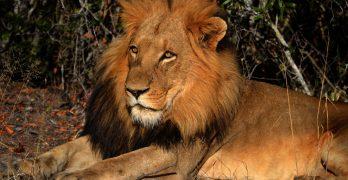 Tag på dit livs rejse. Ta' en safarirejse i Afrika