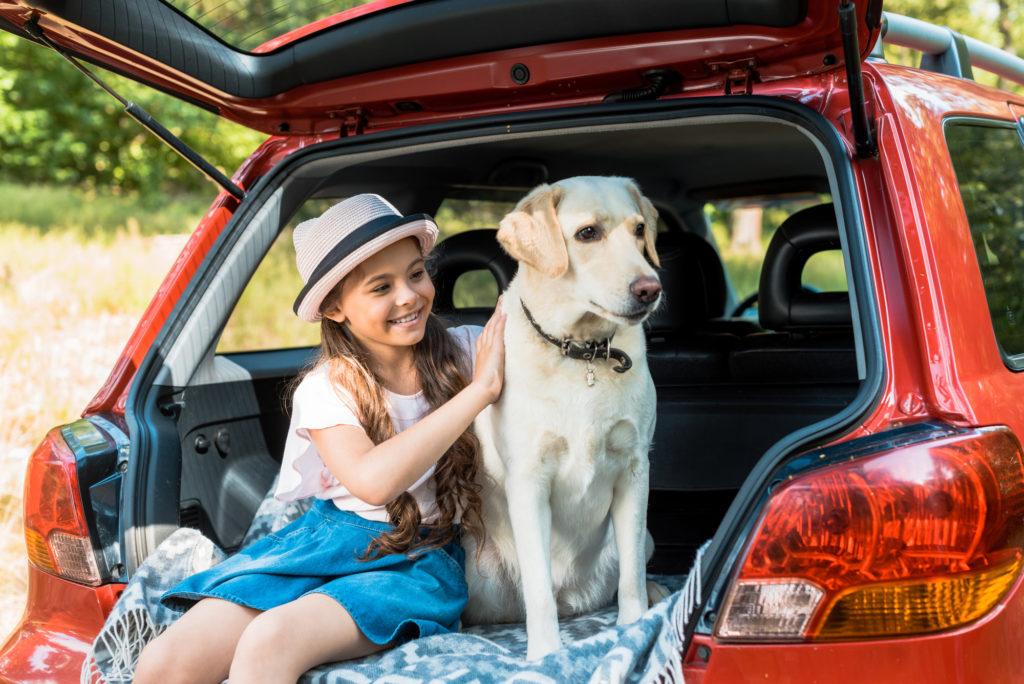 Sådan kan du tage hunden med på bilferie